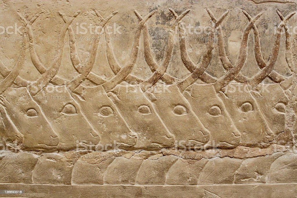 ancient egyptian engravings depicting bulls on a mastab wall stock photo