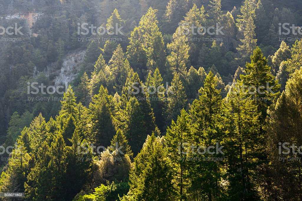 Ancient Forest stock photo