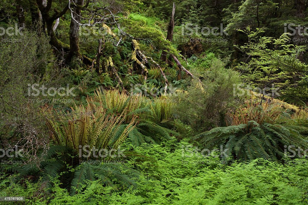 Ancient Green Forest stock photo