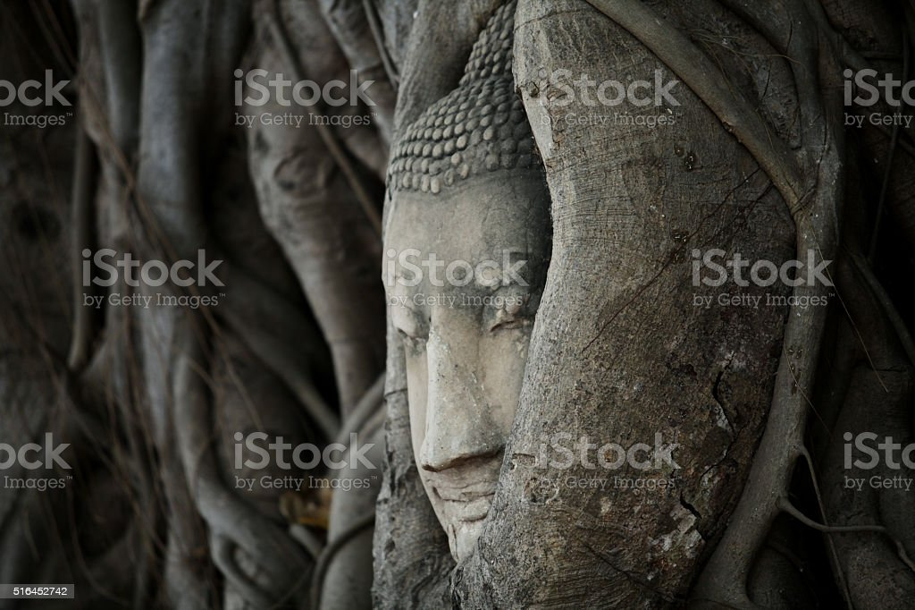 Ancient head of Buddha statue in tree root, Ayutthaya, Thailand stock photo