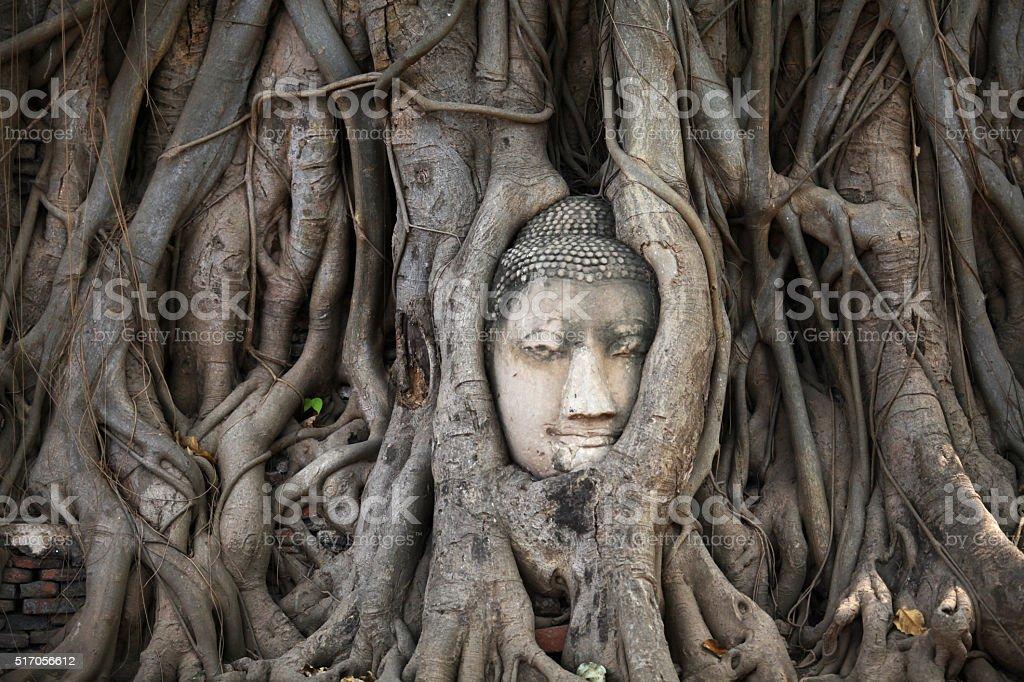 Ancient head of Buddha statue in tree root, Ayutthaya, Thailand stock photo