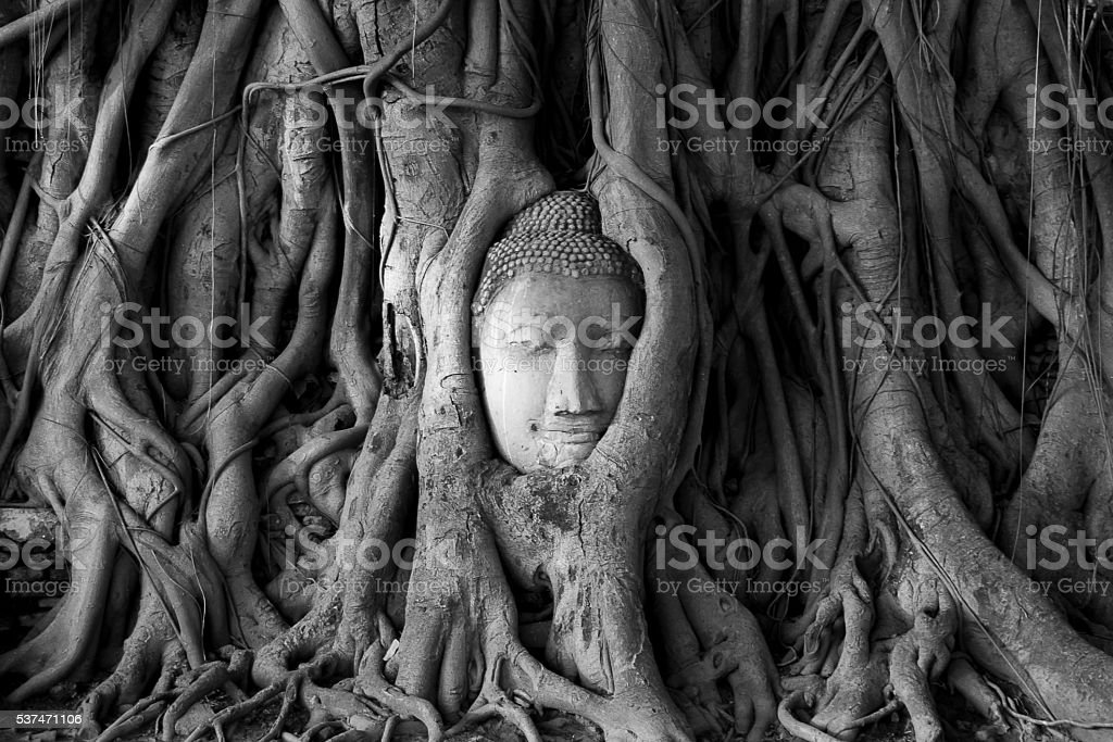 Ancient head of Sandstone Buddha in The Tree Roots form Ayutthaya,...