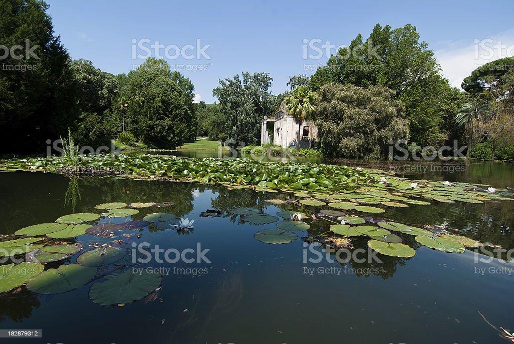 Ancient lake, Water Lillies royalty-free stock photo