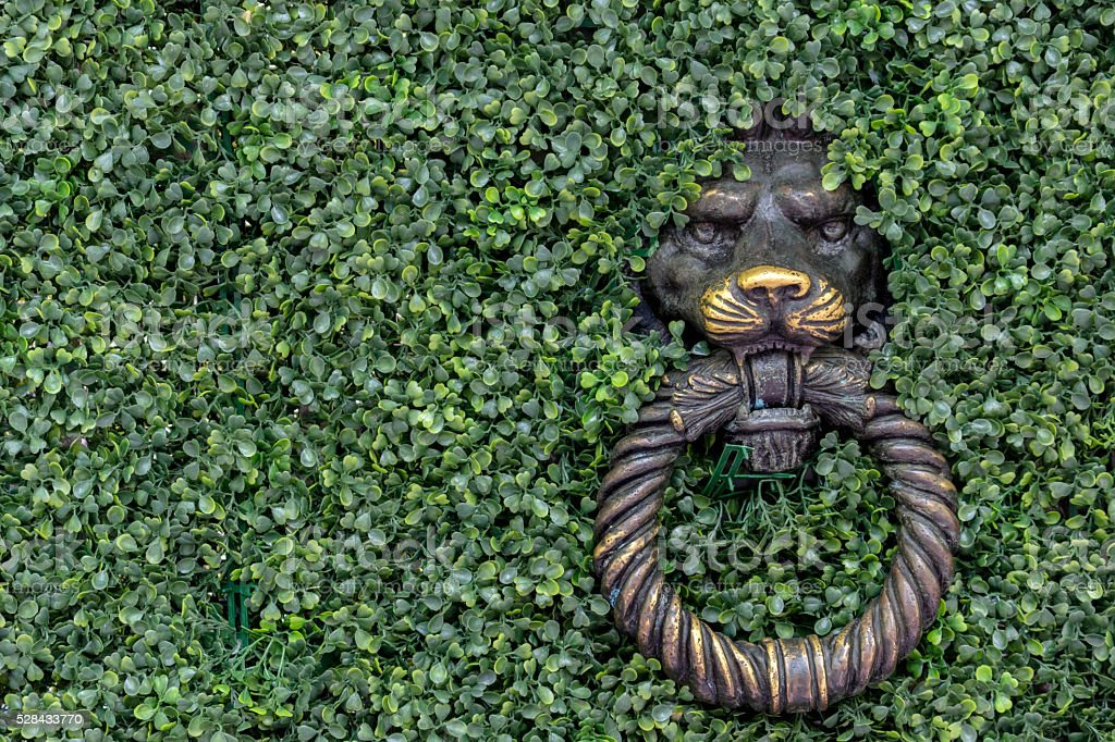 ancient lion knocker covered by green vines stock photo