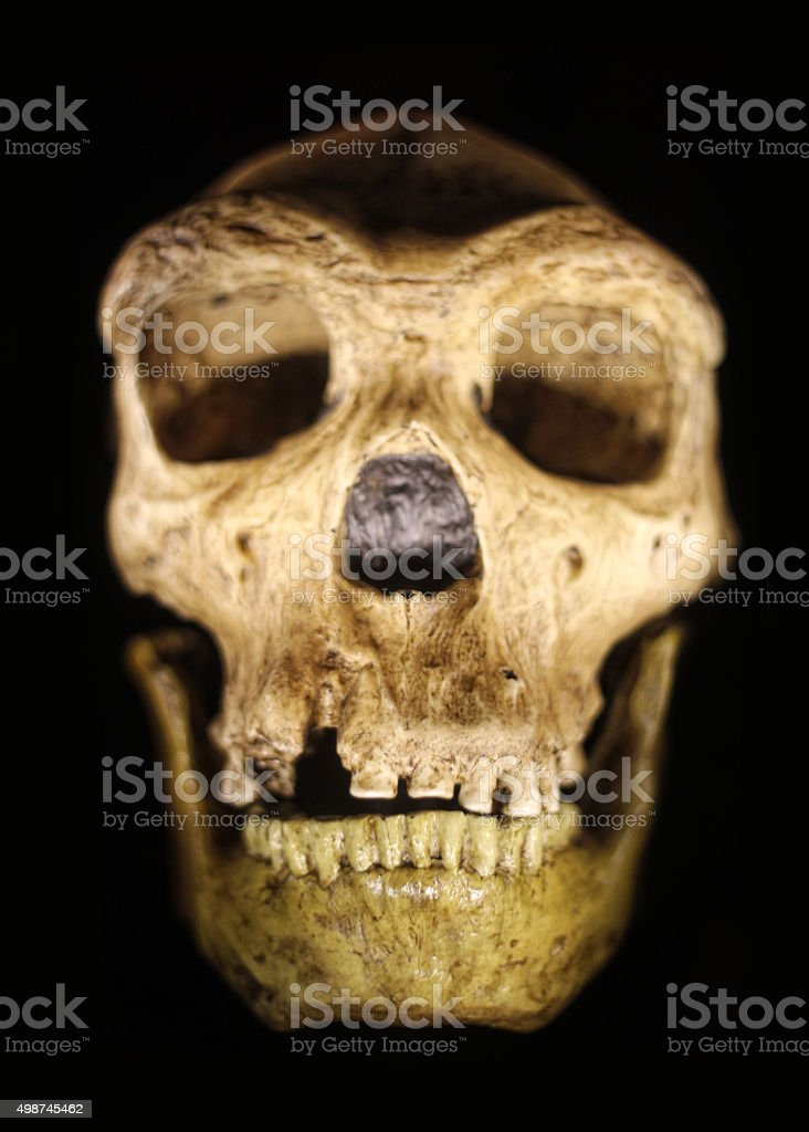 Ancient Neanderthal Skull on Black Background stock photo
