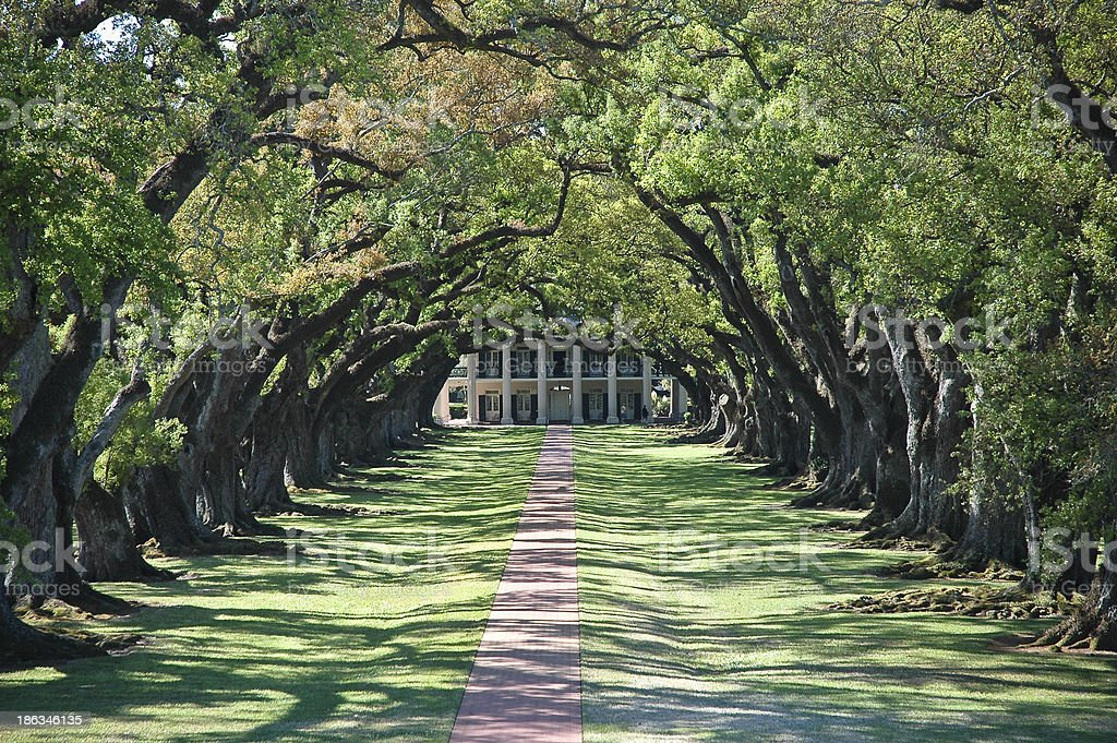 Ancient Oak Plantation stock photo