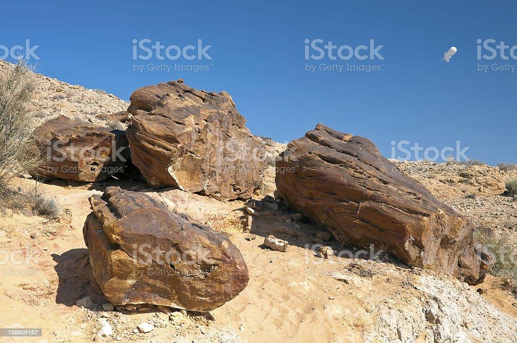 Ancient Petrified wood. stock photo