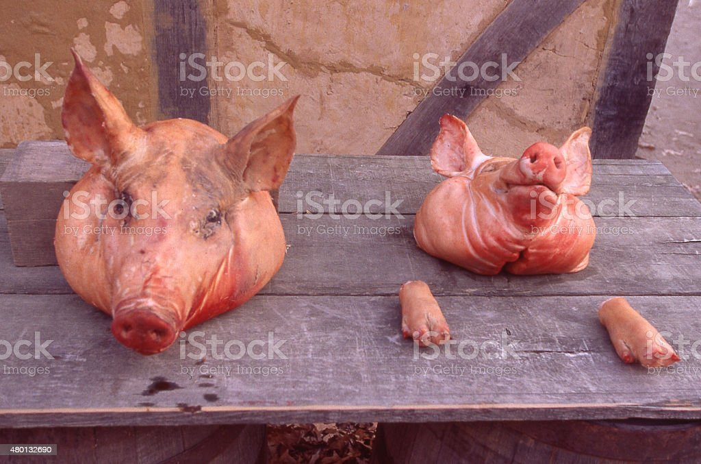 Ancient Practice of Pickling and Salting Pig heads Williamsburg Virginia stock photo