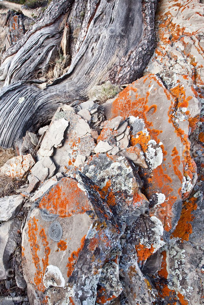 Ancient Rock with Orange Lichen royalty-free stock photo