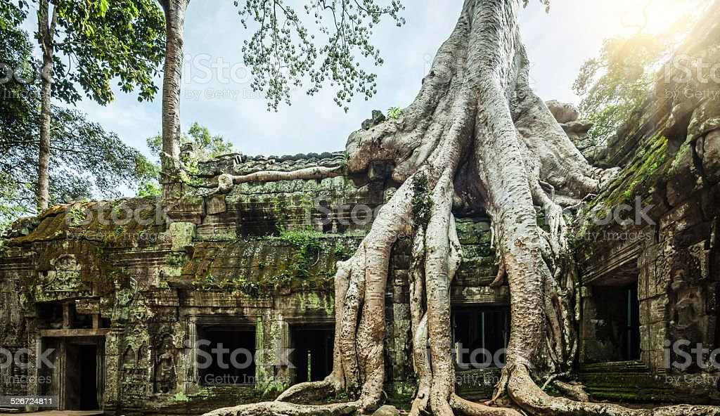 Ancient ruins and tree roots stock photo