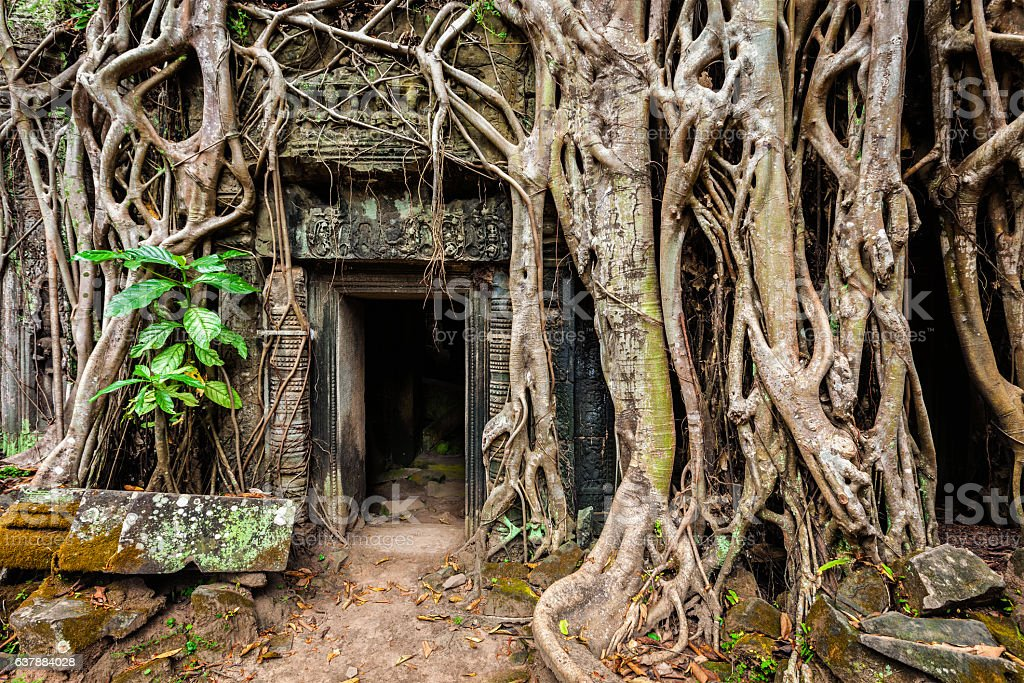 Ancient ruins of Ta Prohm temple, Angkor, Camb stock photo