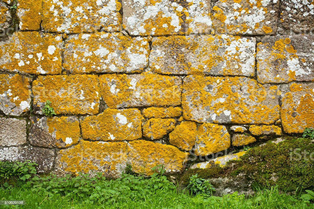 Ancient stone wall, lichen covered, green grass. stock photo