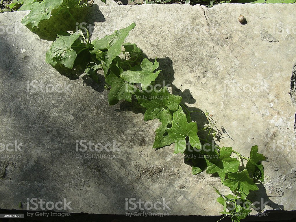 ancient stone wall with lichen royalty-free stock photo