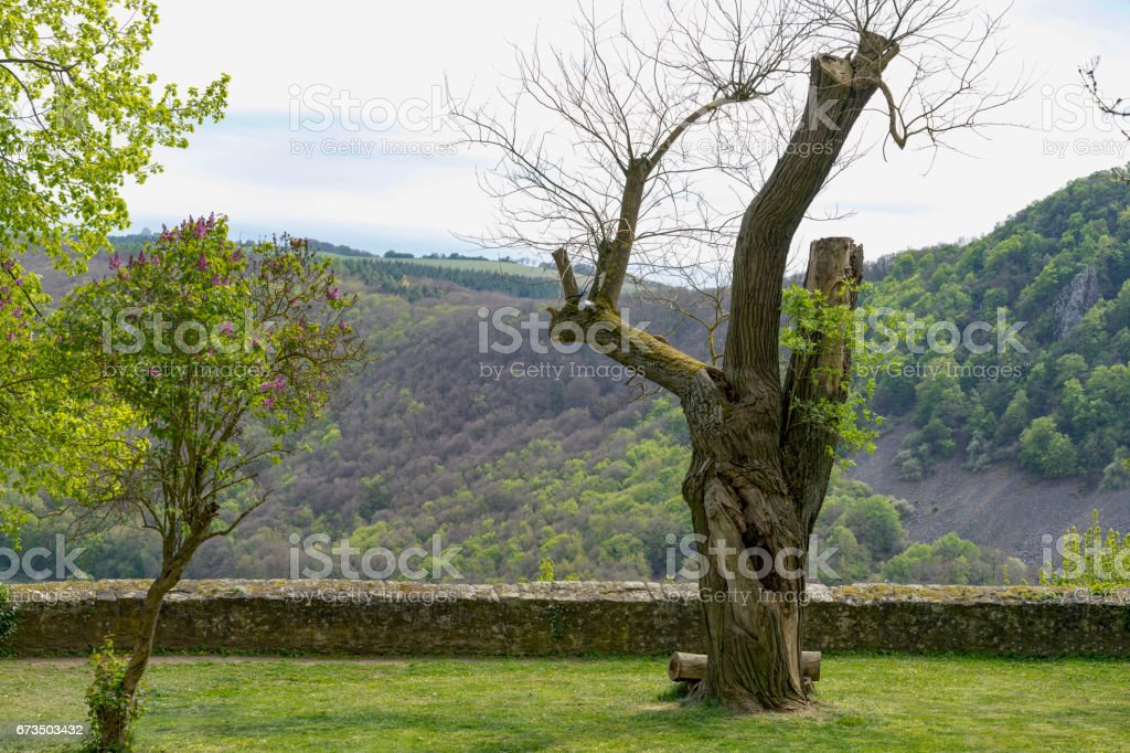 Ancient tree at the end of its lifetime with a big hole in it stock photo