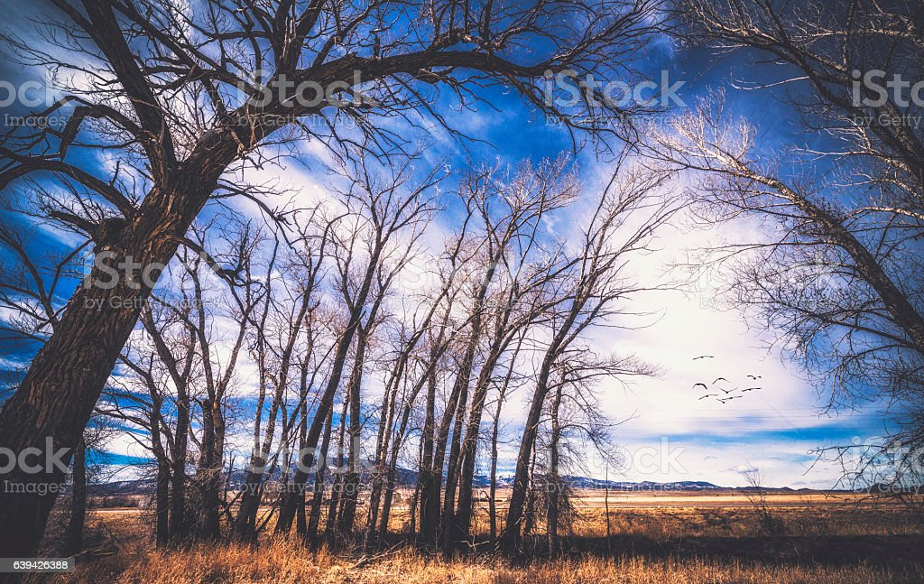 Ancient trees forming arch with bare branches stock photo