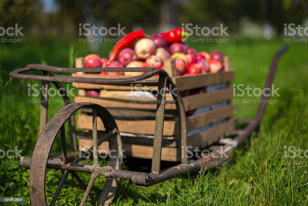 ancient wheelbarrow stock photo