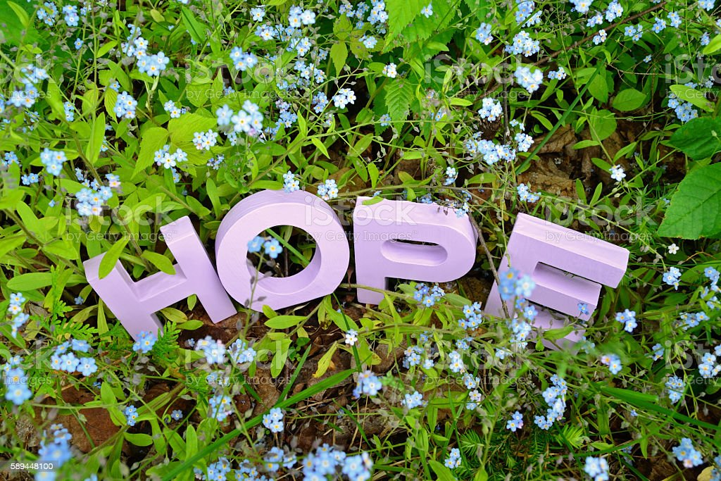 HOPE and Forget-Me-Nots stock photo