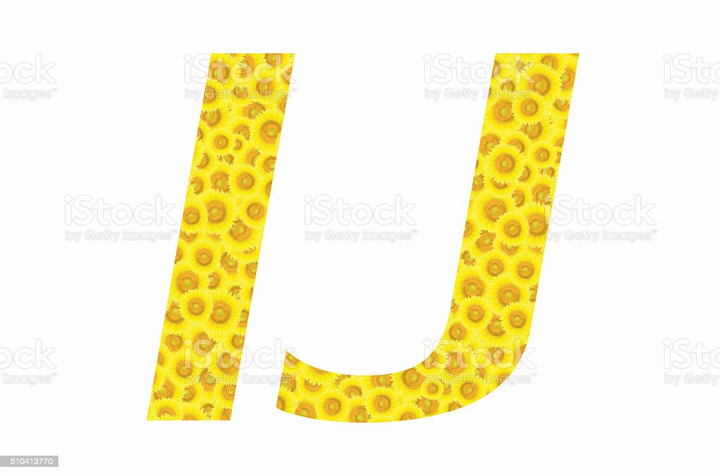 I and J sunflower text on isolated backgrounds stock photo