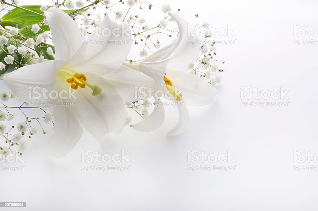 Lilies and others in a white background stock photo