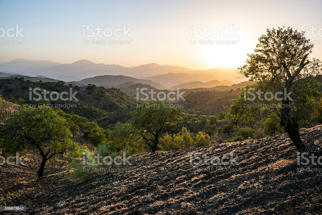 Andalusian landscape at sunset with olive trees in Spain stock photo