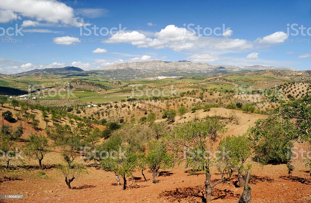 Andalusian landscape in springtime royalty-free stock photo