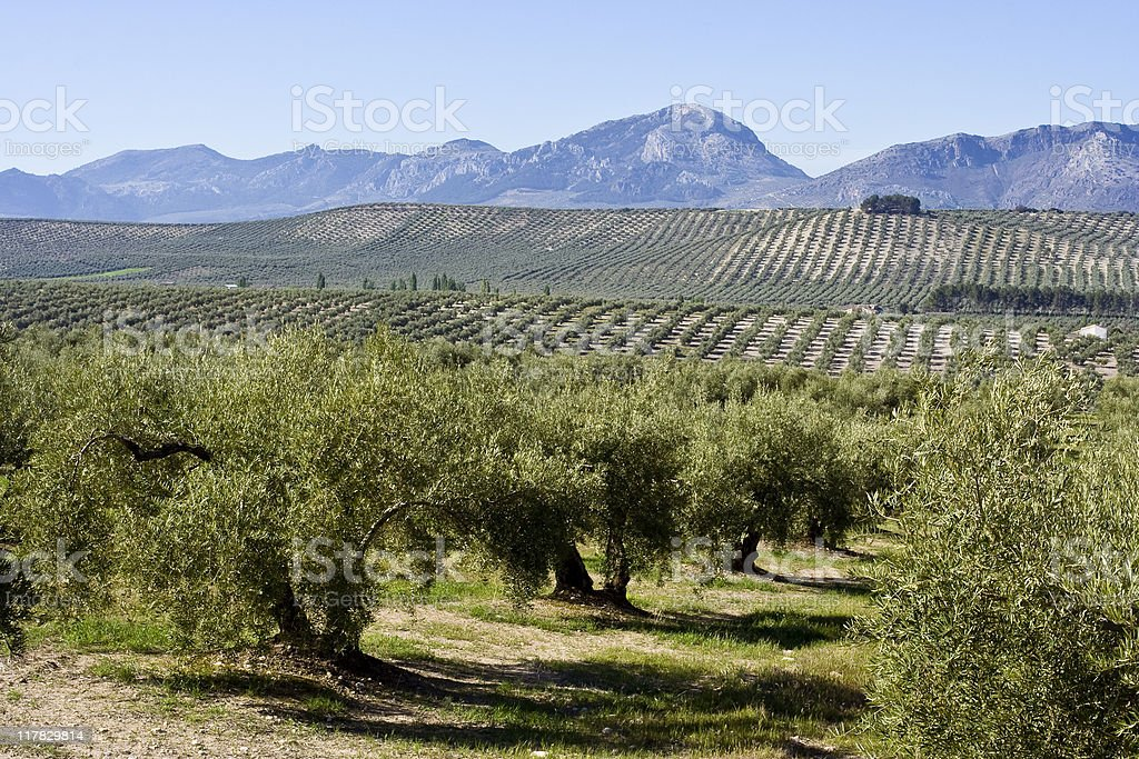 Andalusian landscape royalty-free stock photo