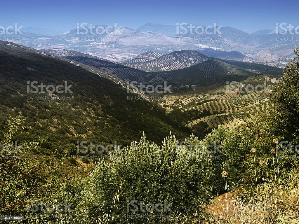 andaluzian country view royalty-free stock photo