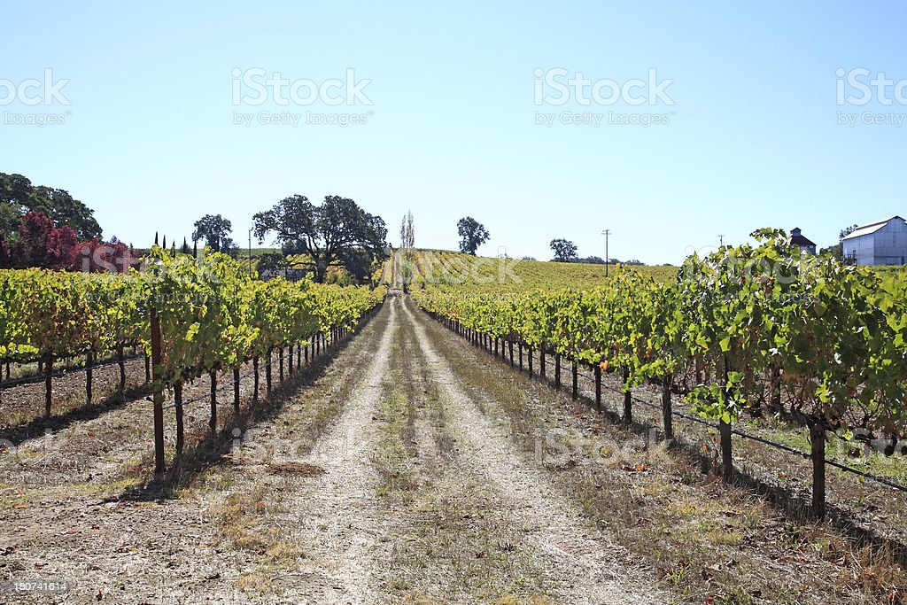Anderson Valley Vineyard Northern California royalty-free stock photo