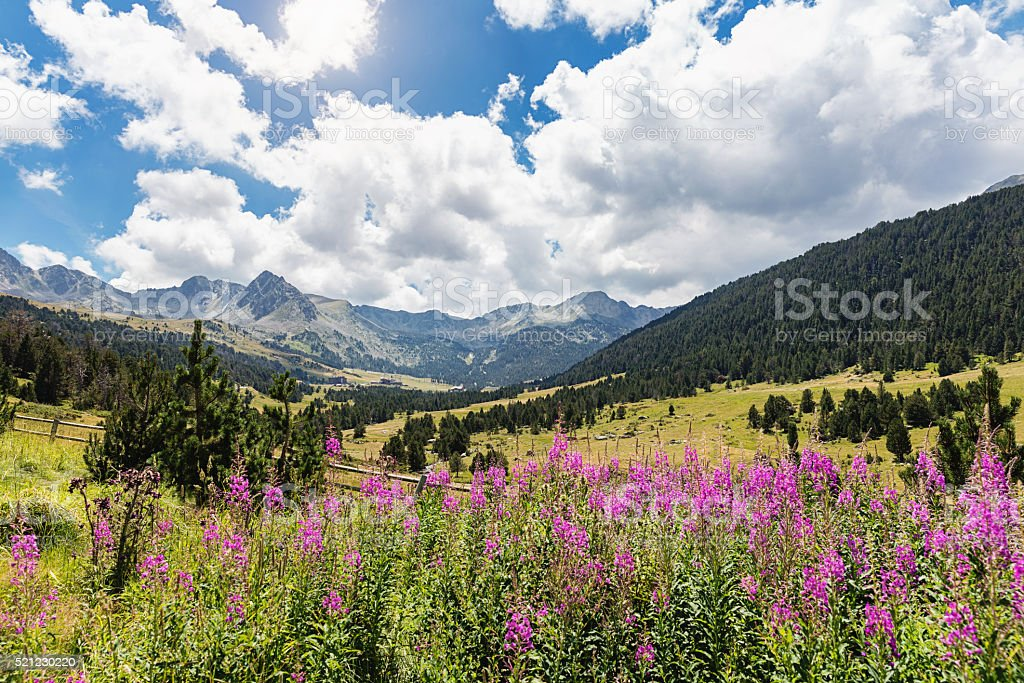 Andorra Blooming Pyrenees Mountain Valley stock photo