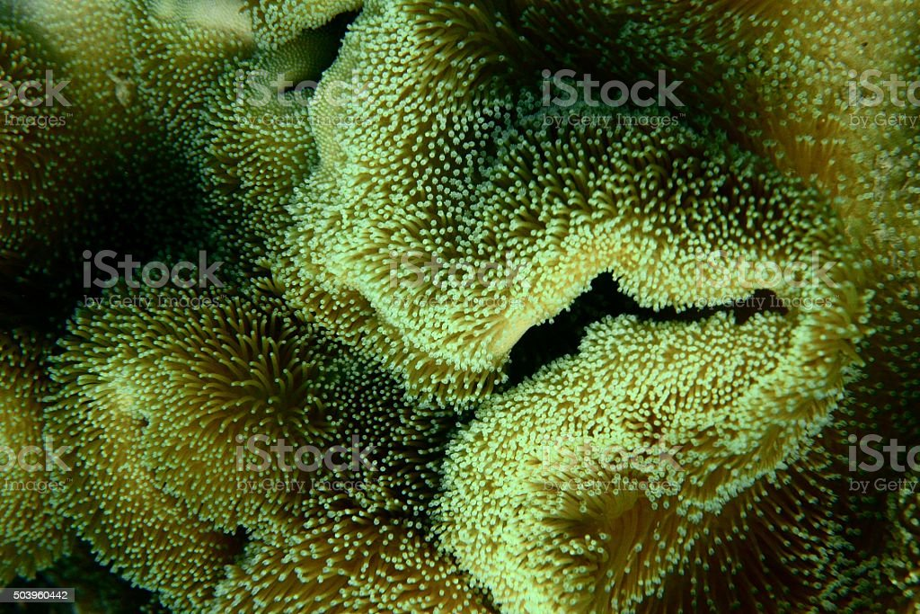 Anemone close up stock photo