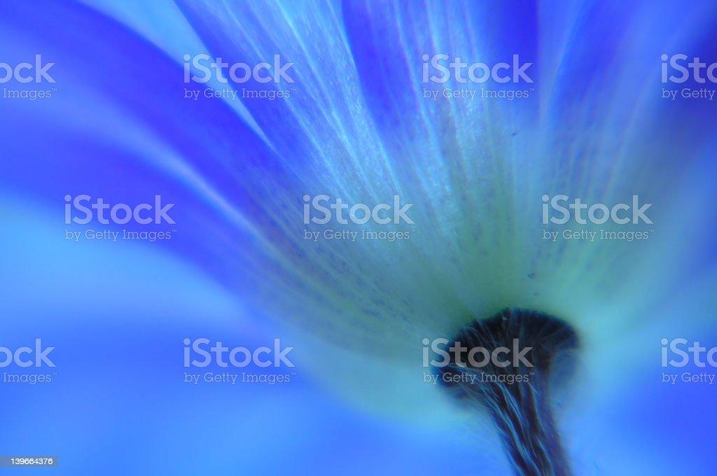 Anemone royalty-free stock photo