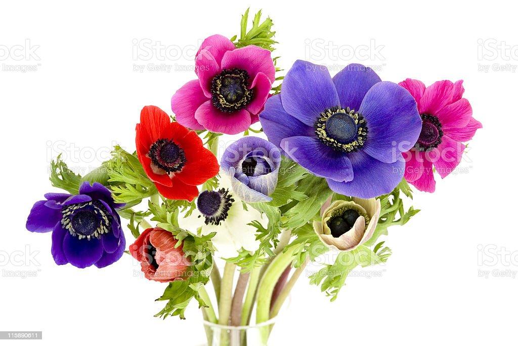 Anemones royalty-free stock photo