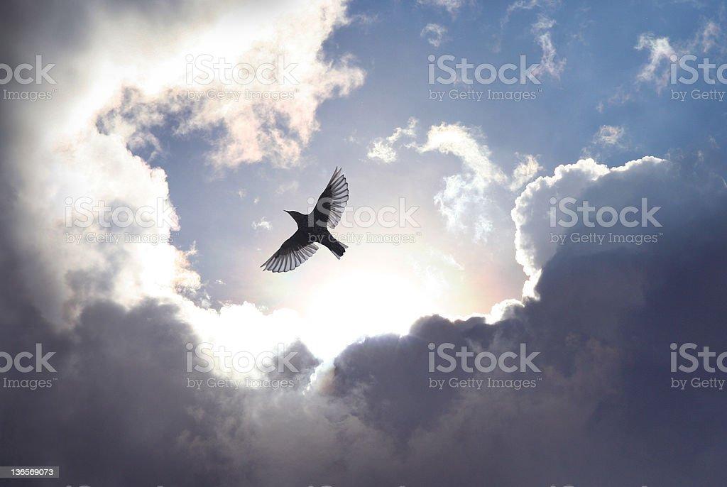 Angel Bird in Heaven stock photo