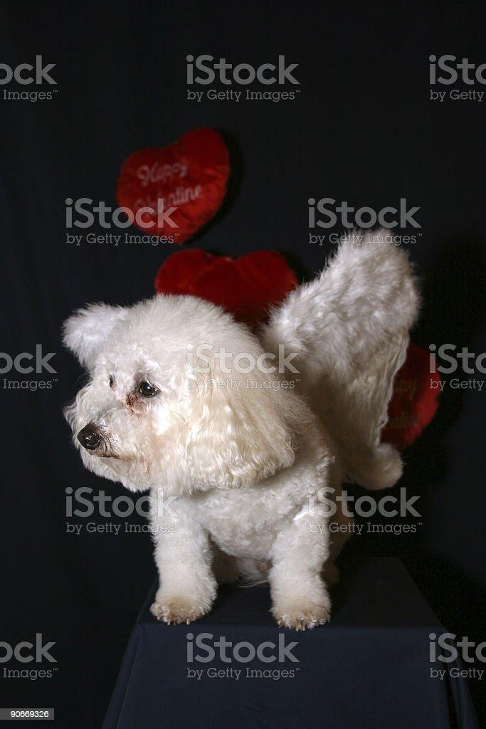 Angel Dog 2 royalty-free stock photo