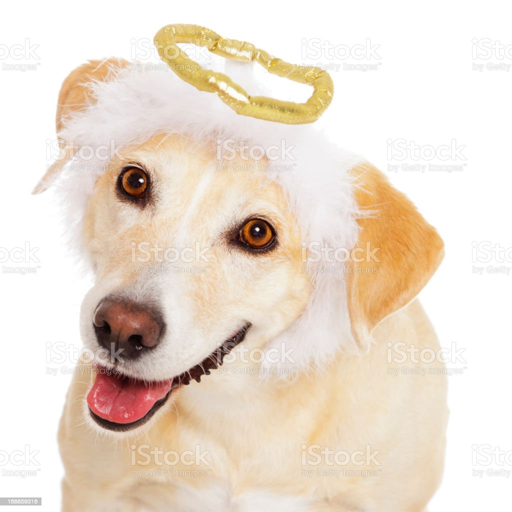 Angel Dog stock photo