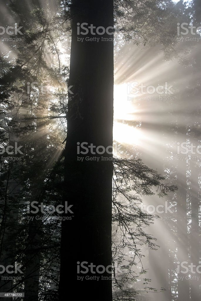 Angel Mist stock photo