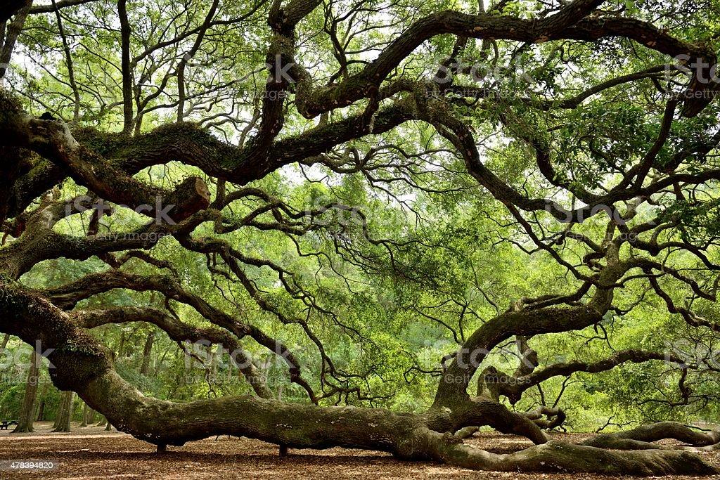 Angel Oak stock photo