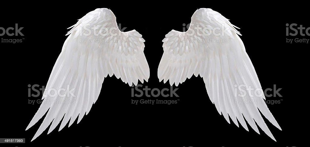 angel wing stock photo