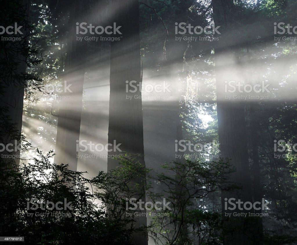 Angelic Atmosphere stock photo