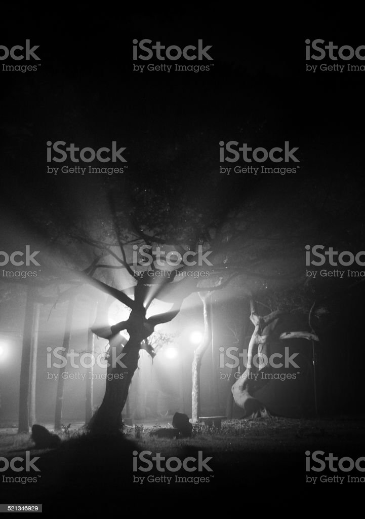 Angelic Branches stock photo