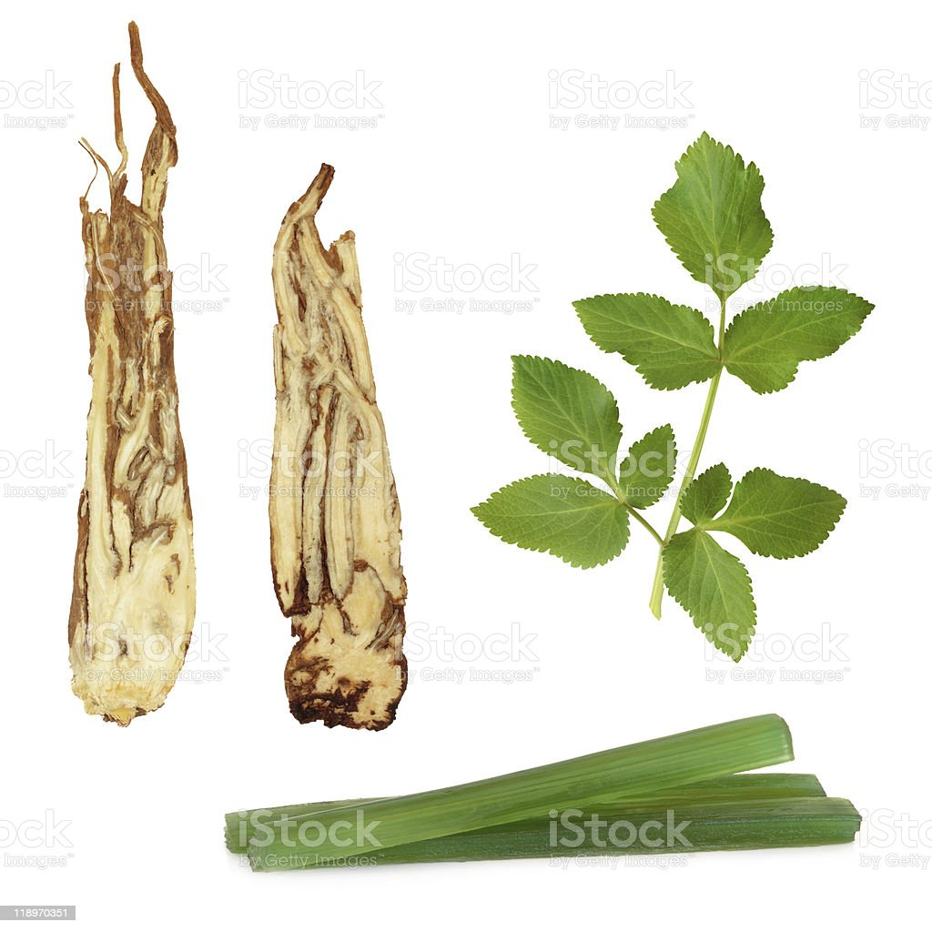 Angelica Herb Products royalty-free stock photo