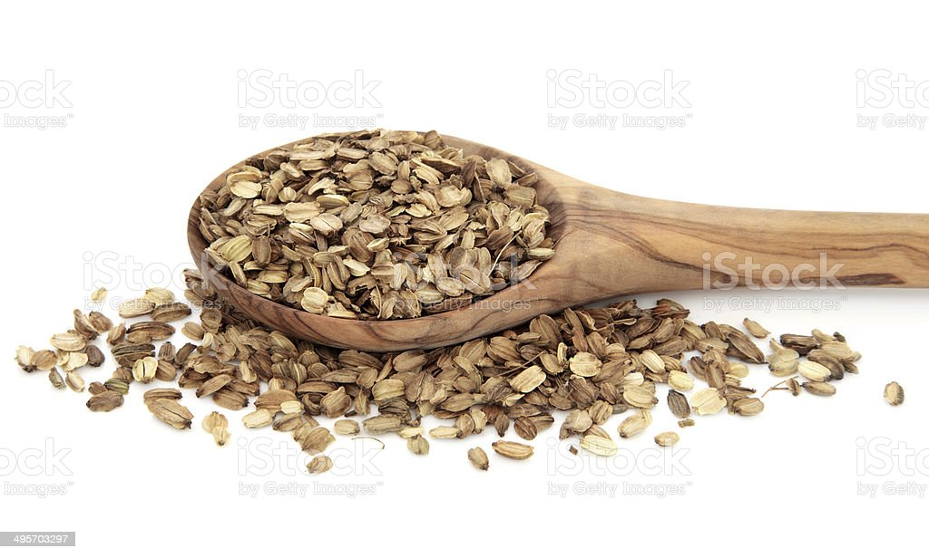 Angelica Herb Seed stock photo