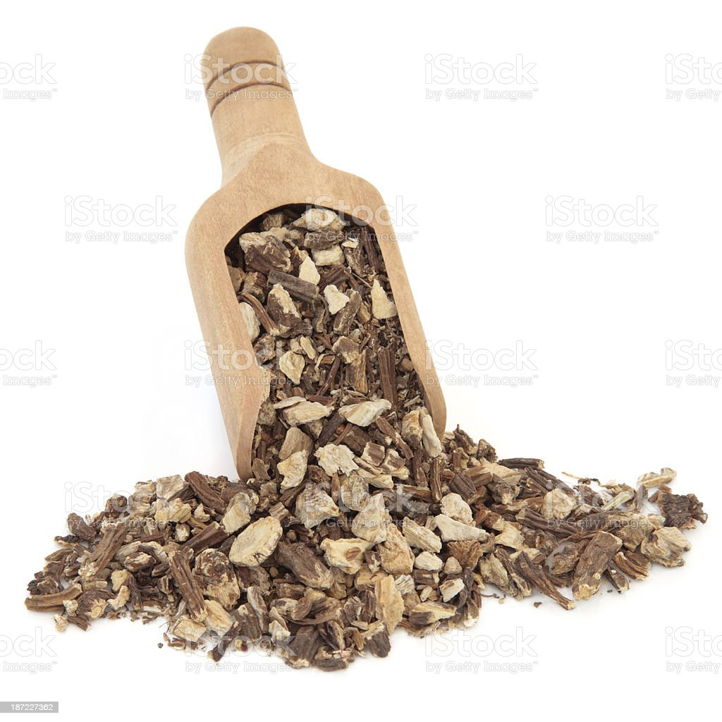 Angelica Root royalty-free stock photo