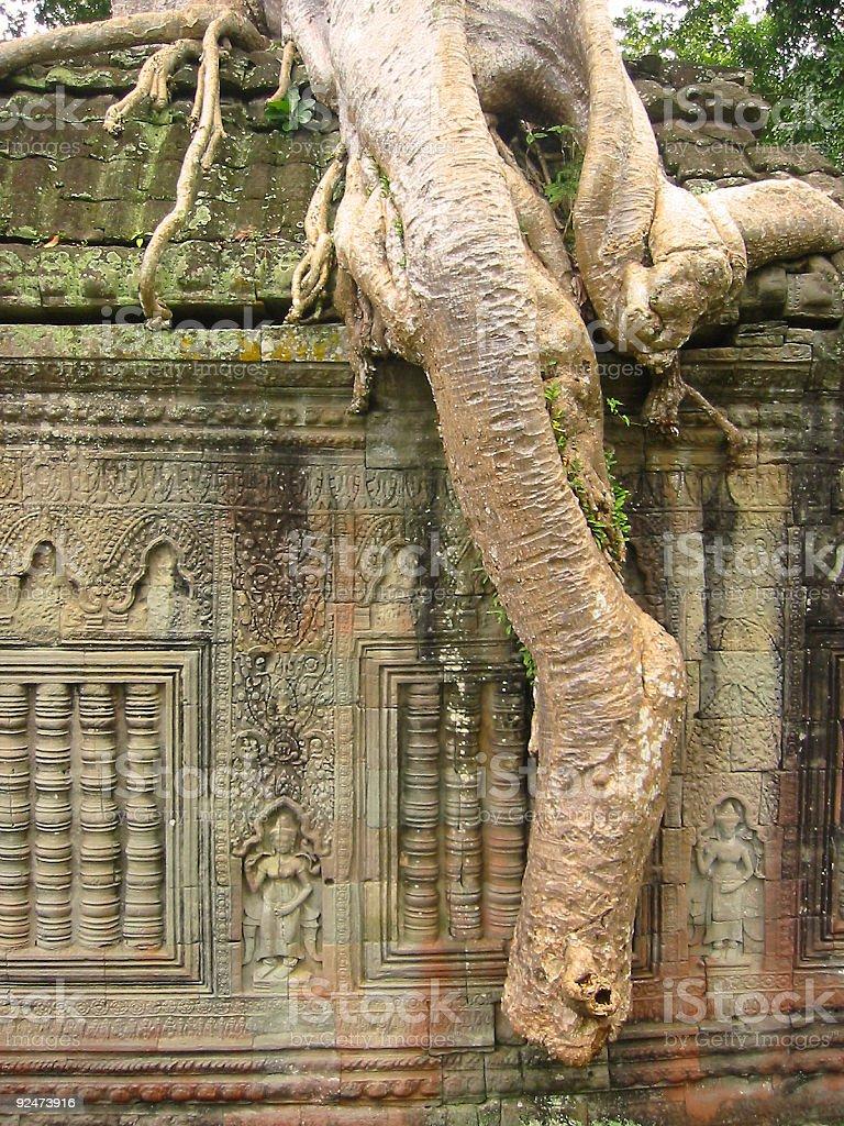 angkor wat banyan roots aspara wall royalty-free stock photo