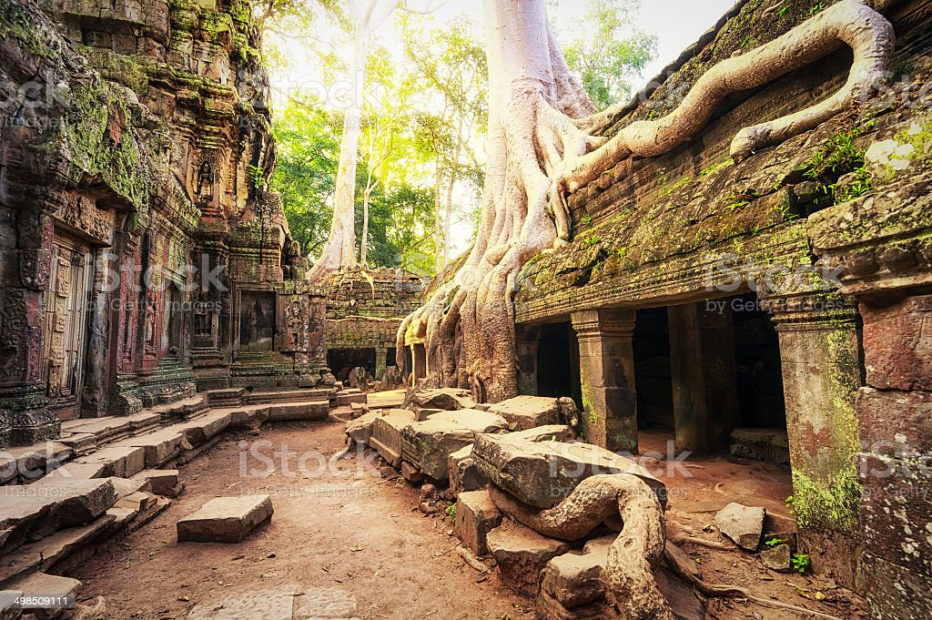 Angkor Wat Cambodia. Ta Prohm Khmer temple stock photo