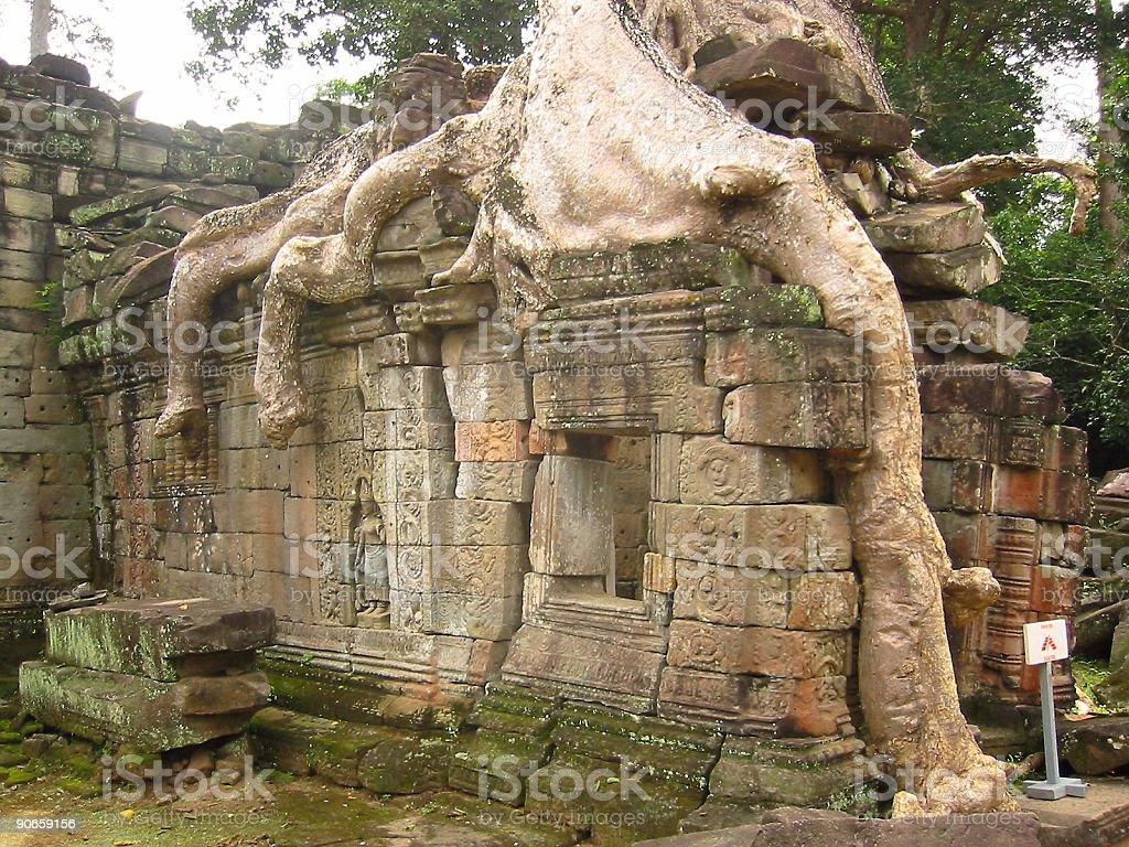 angkor wat overgrown temple royalty-free stock photo