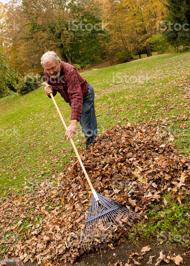 Angle shot of older man raking a pile of leaves in a yard stock photo