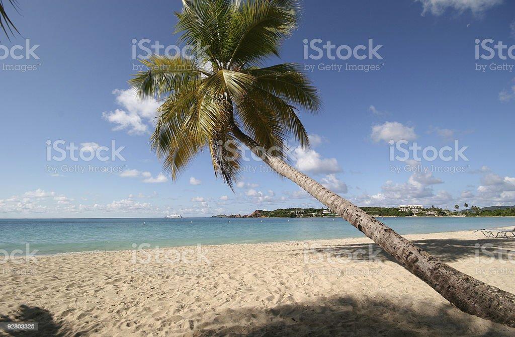 Angled Palm royalty-free stock photo