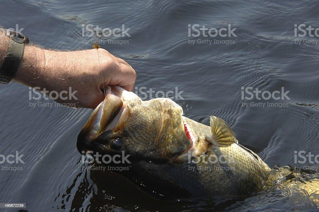 Angler in Luck stock photo