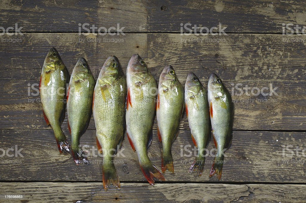 angling trophy royalty-free stock photo